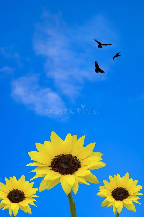 3 solrosor med fåglar arkivfoton