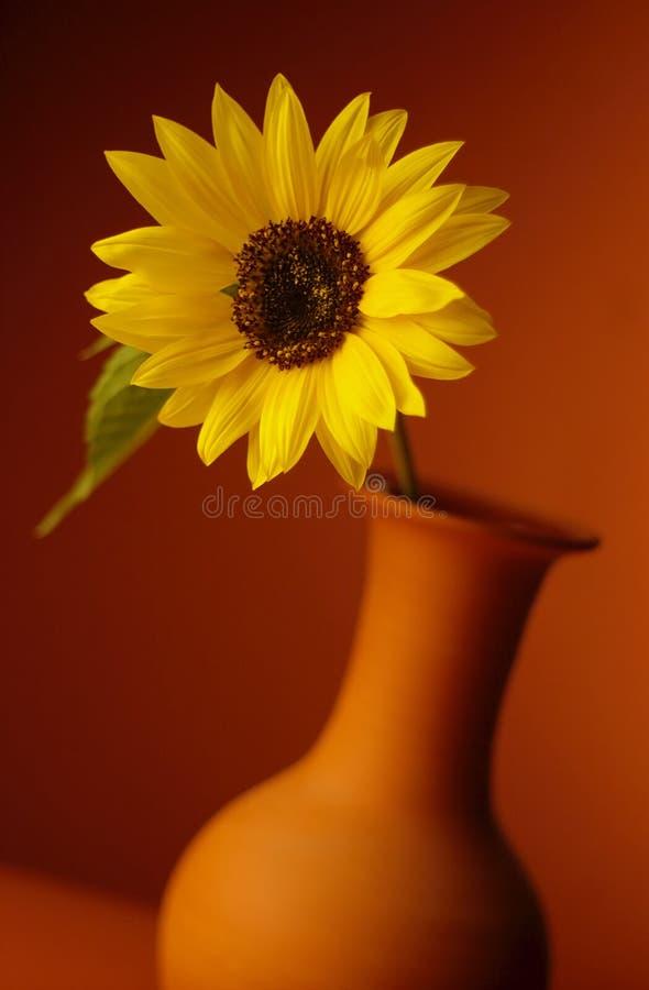 solrosvase arkivfoto