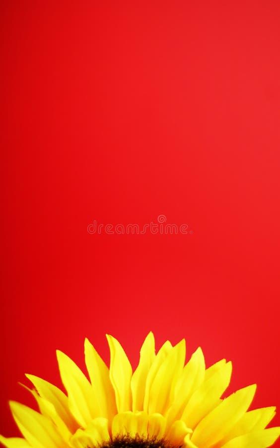 solrosyellow arkivfoto