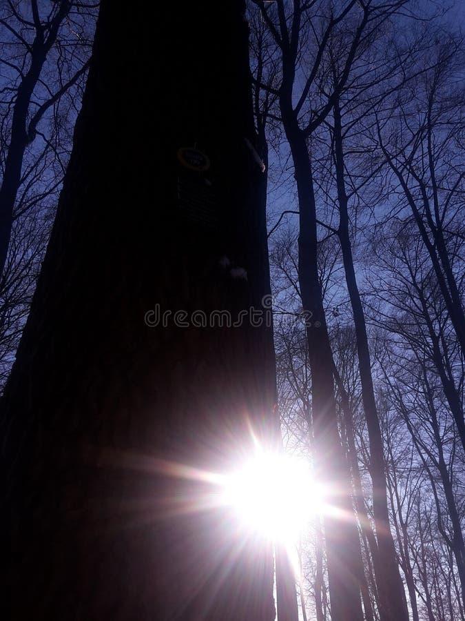 Solsken bak träd arkivbilder