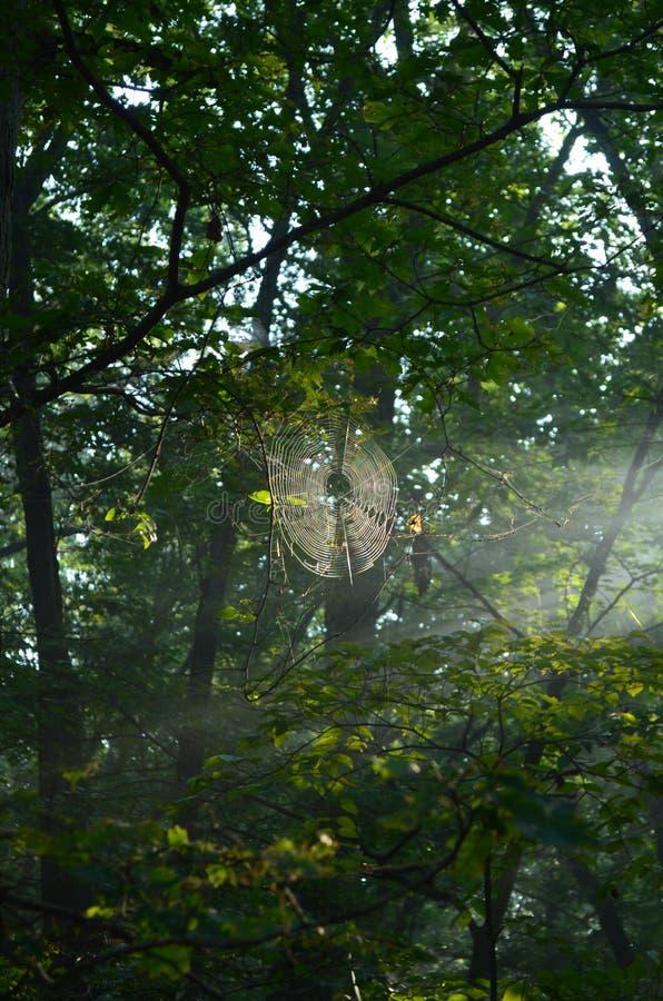 Solsken i en spindelrengöringsduk arkivbilder