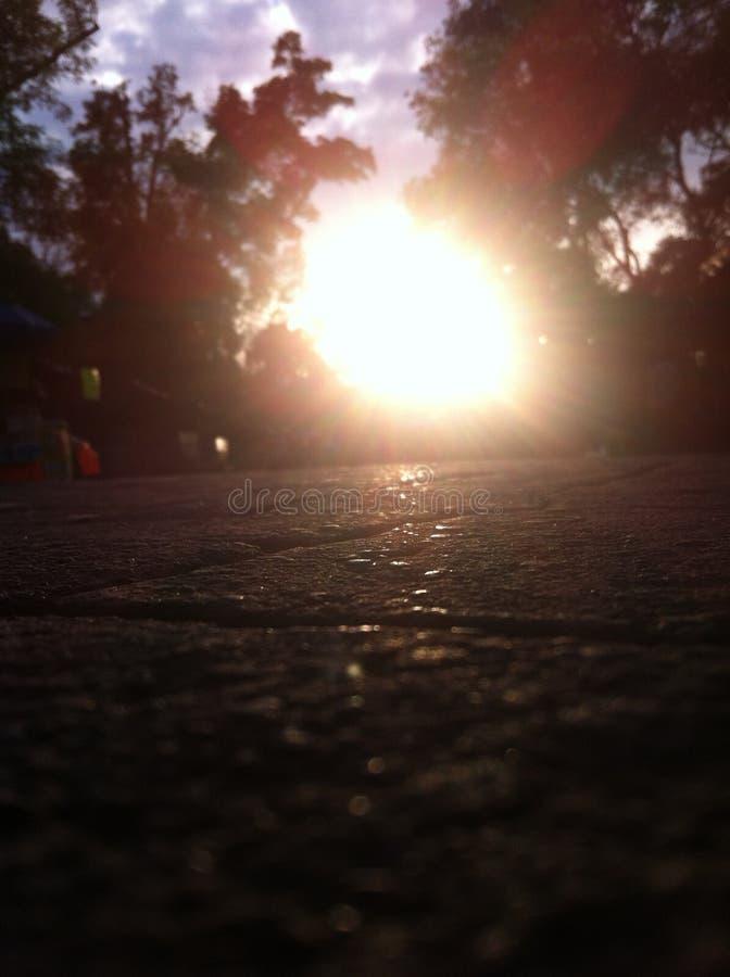 Solsken i mitt av parkera royaltyfria bilder