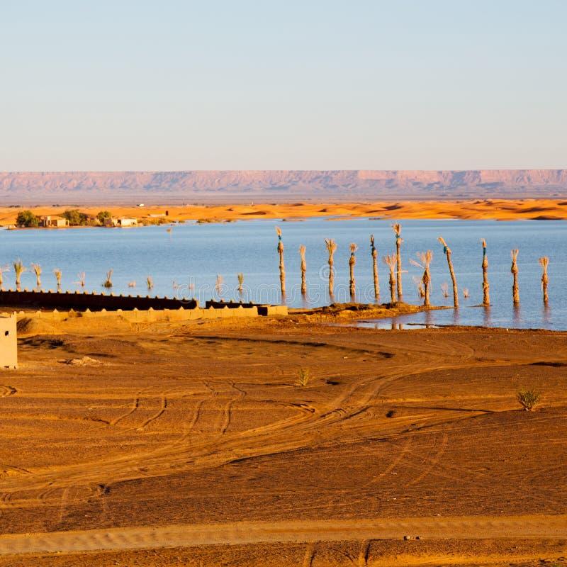 solsken i sjögulingöknen av den Marocko sand och dyn royaltyfri bild