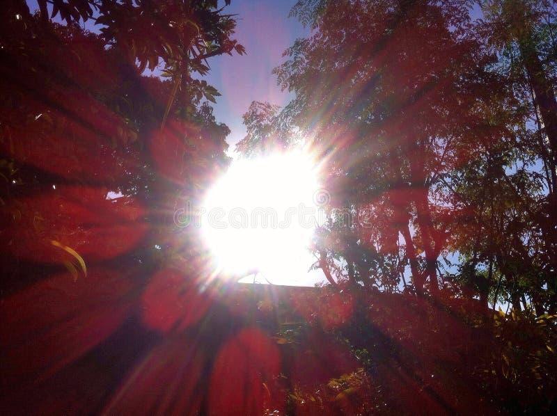Solsken på trän fotografering för bildbyråer