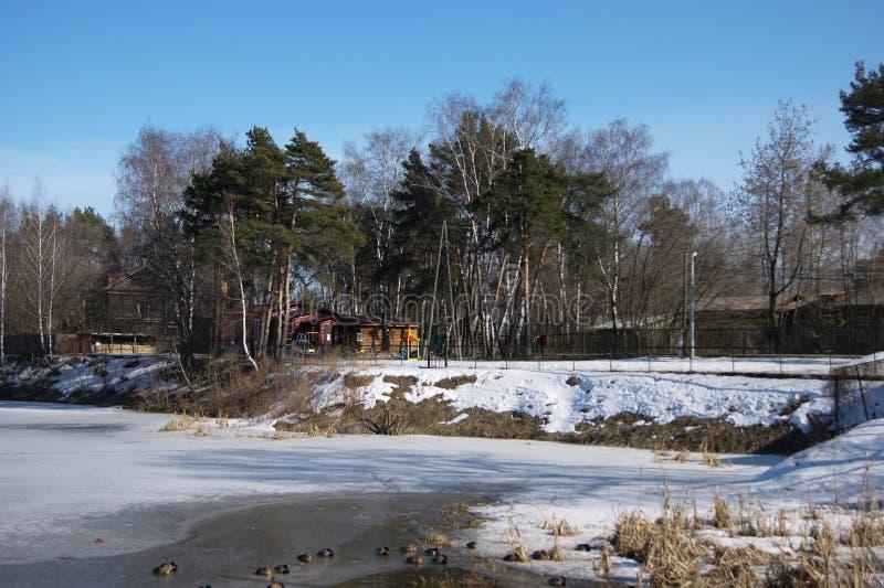 Solskenlandskap med snö och änder royaltyfri fotografi
