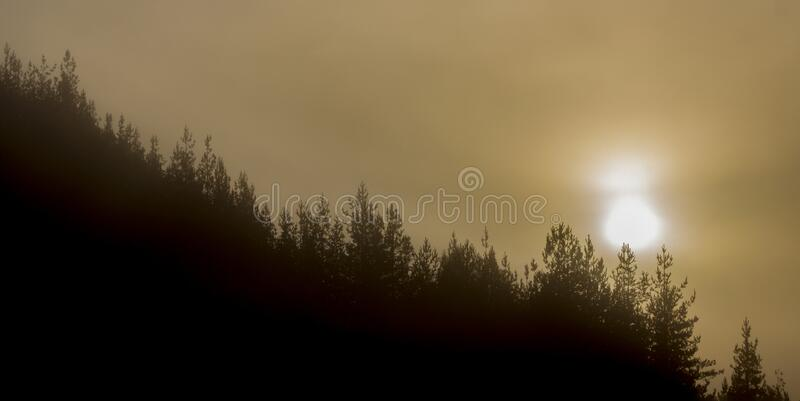 Solskivan färgar misthimlen ovanför tallskogarna royaltyfri fotografi