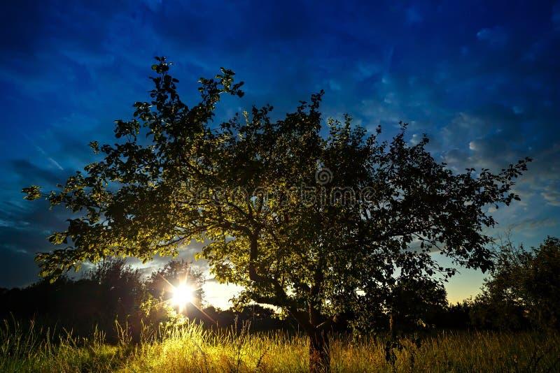 Solsolnedgång som skiner till och med kronan av trädet royaltyfri foto