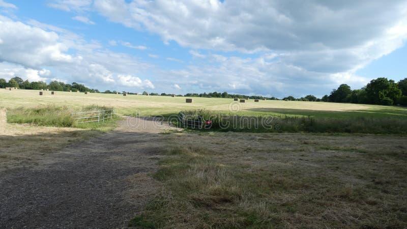 Solstice d'été, longues journées et temps chaud ensoleillé en Angleterre 17 image stock