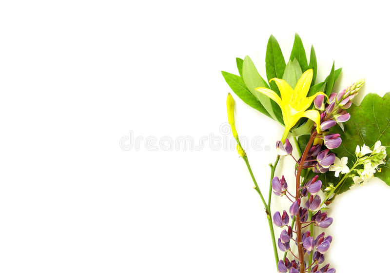 Solstice midsummer herbs flowers. On white background stock images