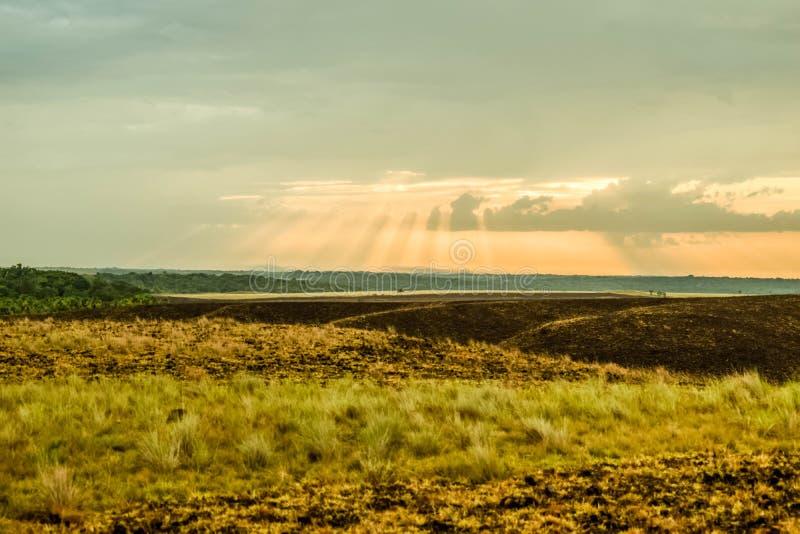 Solstrålar i savannet royaltyfria bilder