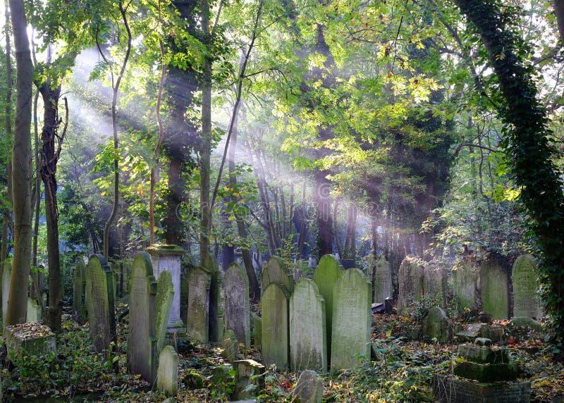 Solstrålar på bevuxna gravar i kyrkogård arkivbilder