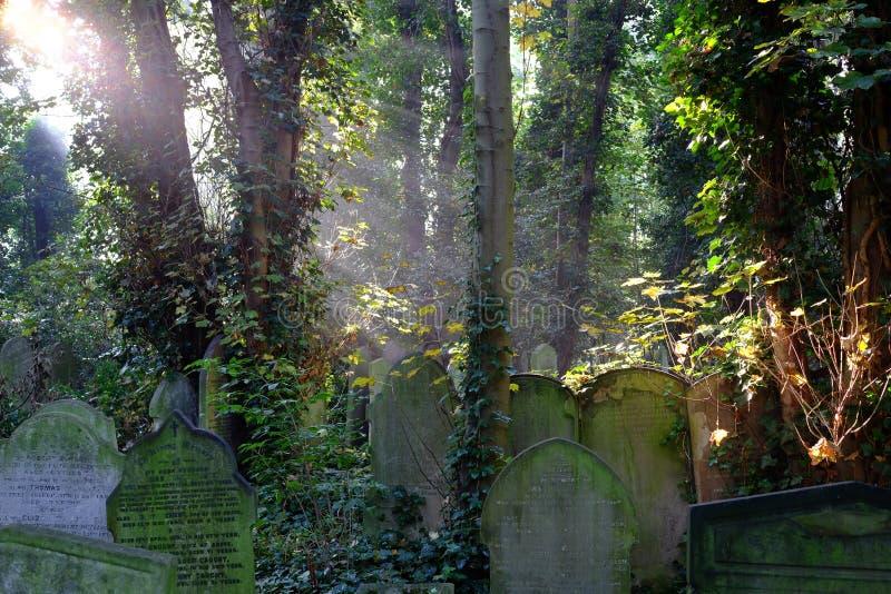 Solstrålar på bevuxna gravar i kyrkogård royaltyfri fotografi