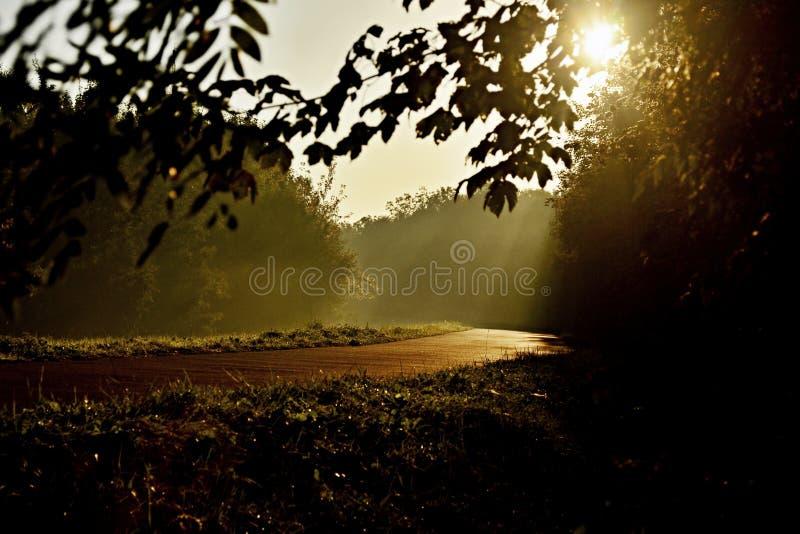 Solstrålar på floden arkivfoton