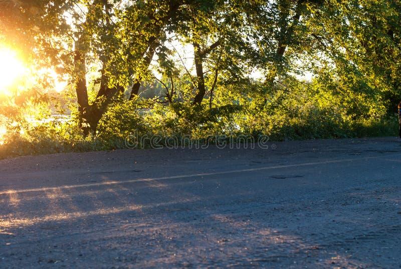 Solstrålar på skogvägen fotografering för bildbyråer