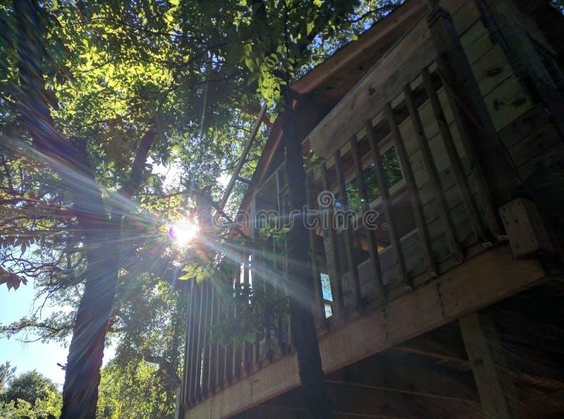 Solstrålar på trädhus royaltyfria foton