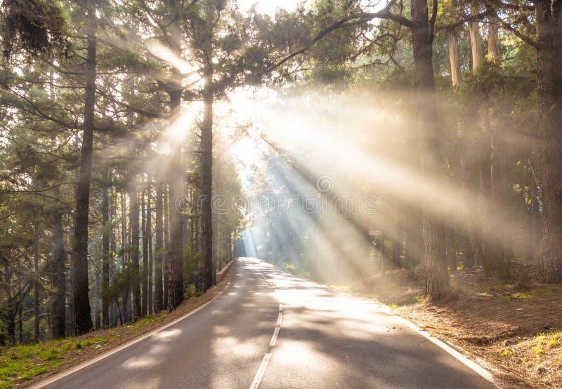 Solstrålar på vägen i skog arkivfoton