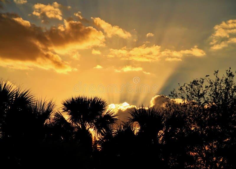 Solstrålar som kommer ut ur moln under solnedgång i Ft Tränga igenom Florida med konturn av palmträd som inramar fotoet arkivfoton
