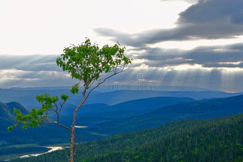 Solstrålar till och med moln, västra Newfoundland, Kanada arkivfoto