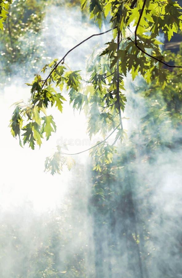 Solstrålar till och med rök i skogen royaltyfri foto