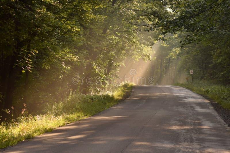 Solstrålar till och med träden på en landsväg arkivfoton