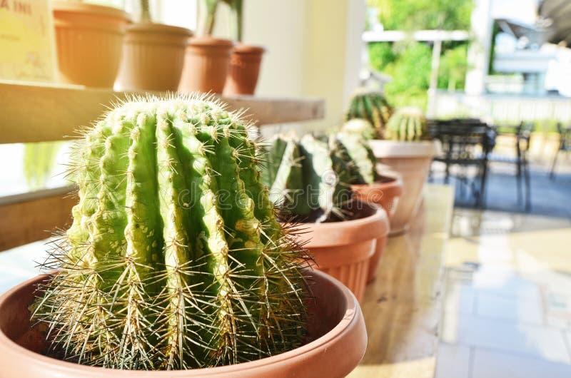 Solstrålen exponerar kaktuskrukaskärmen arkivfoto