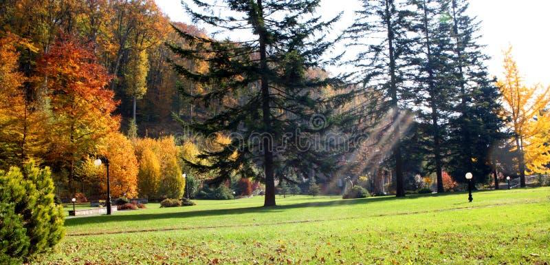 Solstrålen i parkerar på en härlig dag fotografering för bildbyråer