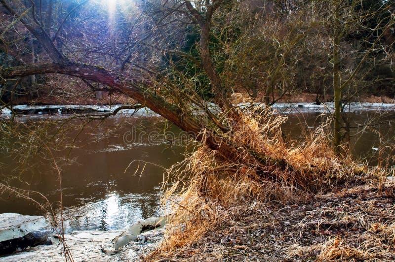 Solstrålsken på flodbanken med isflak fotografering för bildbyråer