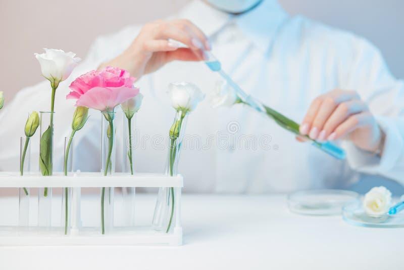 Solución de esencia floral de extracción natural orgánica con científico en laboratorio Concepto de biotecnología foto de archivo libre de regalías