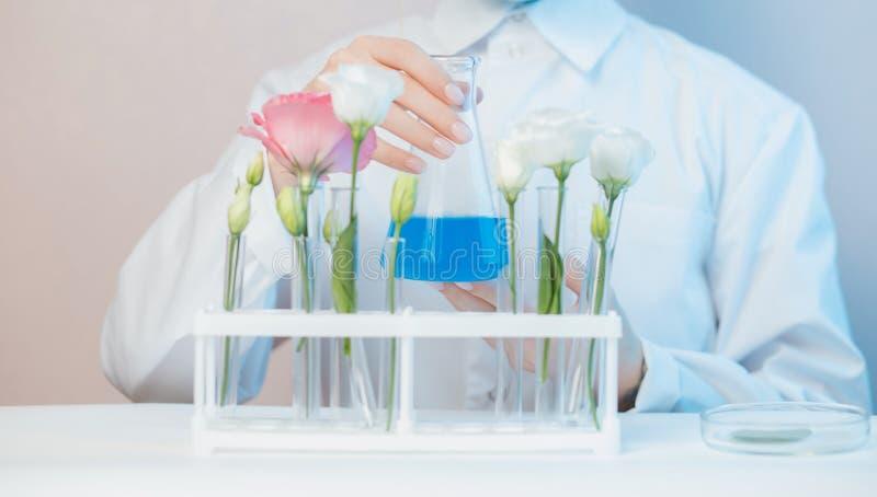 Solución de esencia floral de extracción natural orgánica con científico en laboratorio Concepto de biotecnología fotografía de archivo libre de regalías