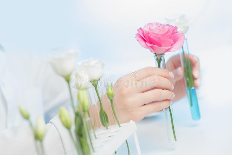 Solución de esencia floral de extracción natural orgánica con científico en laboratorio Concepto de biotecnología fotografía de archivo