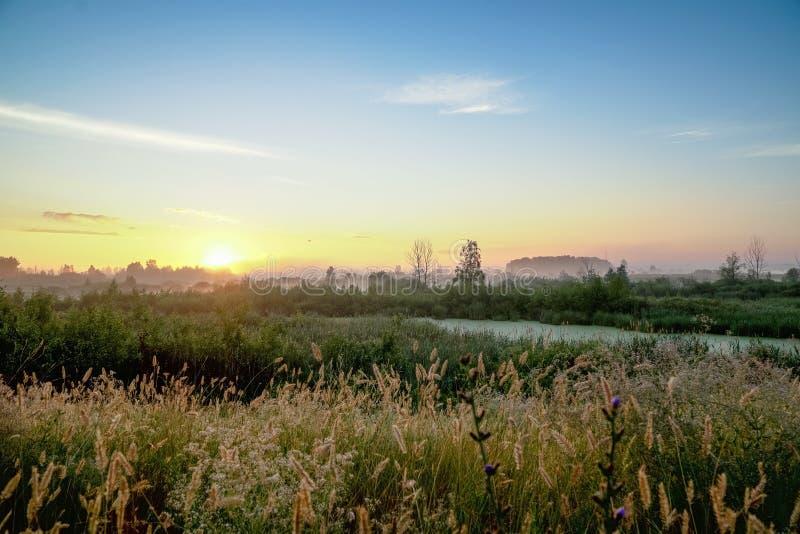 Soluppgång över ängar på sommarmorgon royaltyfri bild