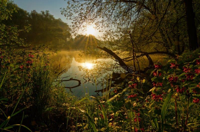 Soluppgång över att ånga vatten arkivbilder