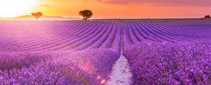 Soluppgång över att blomma fält av lavendel på den Valensole platån i Provence i sydliga Frankrike fantastisk liggandesommar arkivfoton