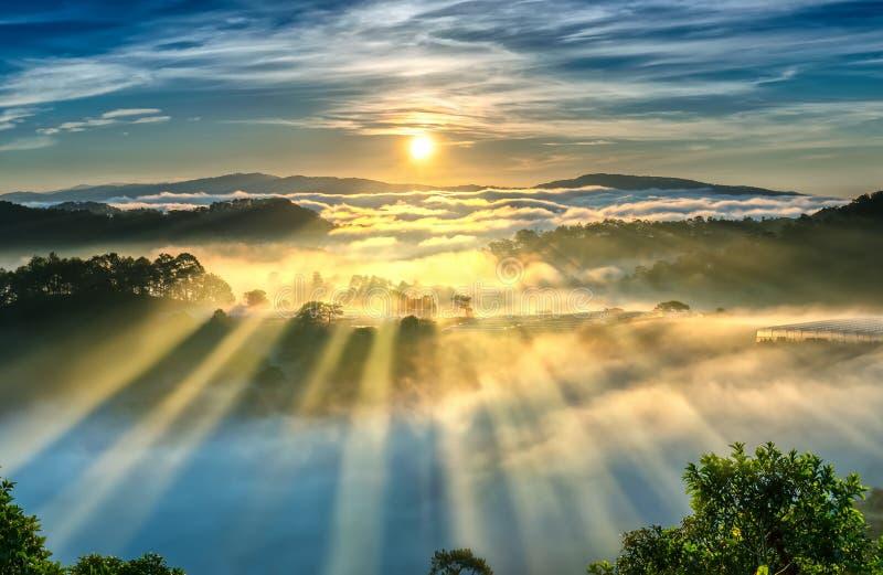 Soluppgång över backen som en pinjeskog med långa solstrålar passerar till och med dalen med, sörjer gula soliga morgnar detta me arkivfoto