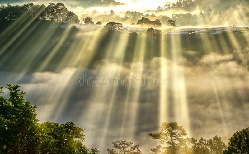 Soluppgång över backen som en pinjeskog med långa solstrålar passerar till och med dalen med, sörjer gula soliga morgnar detta me royaltyfria bilder