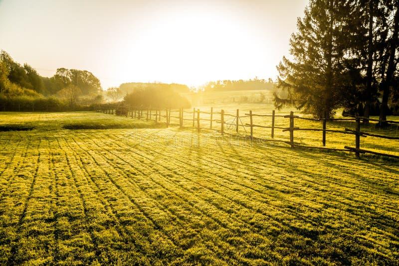Soluppgång över dimmig grässlätt arkivfoto
