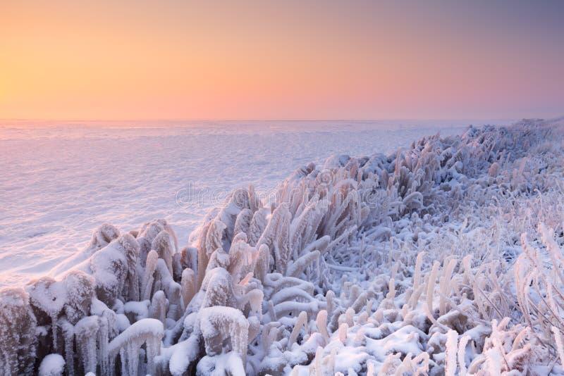Soluppgång över en djupfryst sjö i Nederländerna royaltyfri fotografi