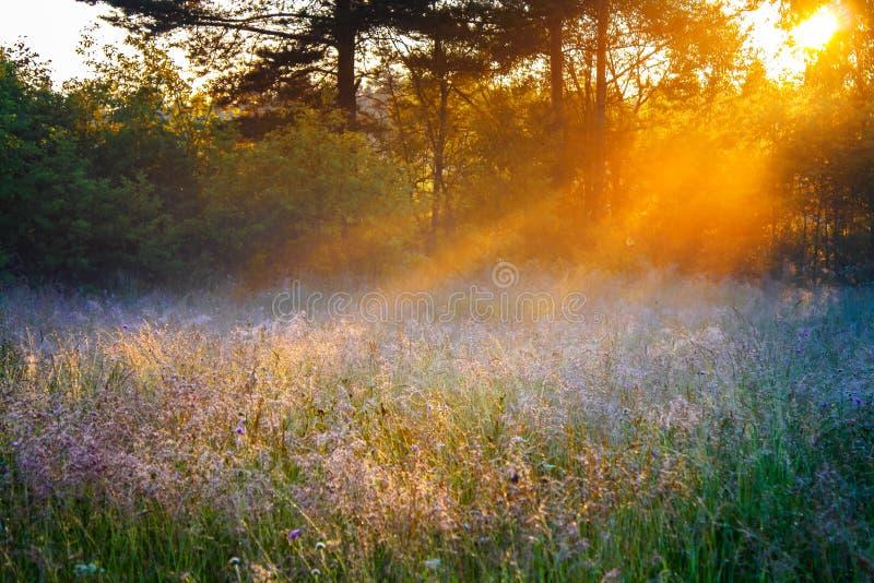 Soluppgång över en sommar som blomstrar ängen arkivfoton