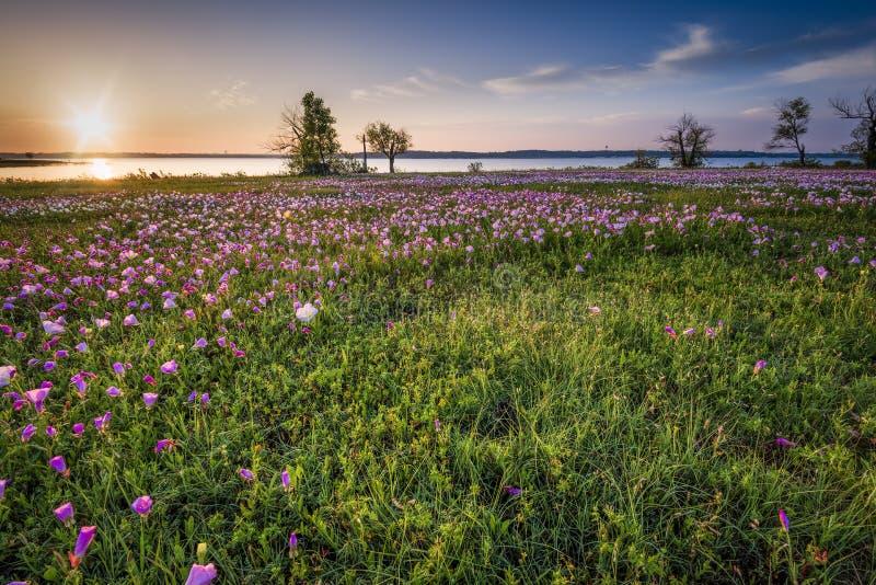 Soluppgång över ett sjö- och vildblommafält royaltyfri bild