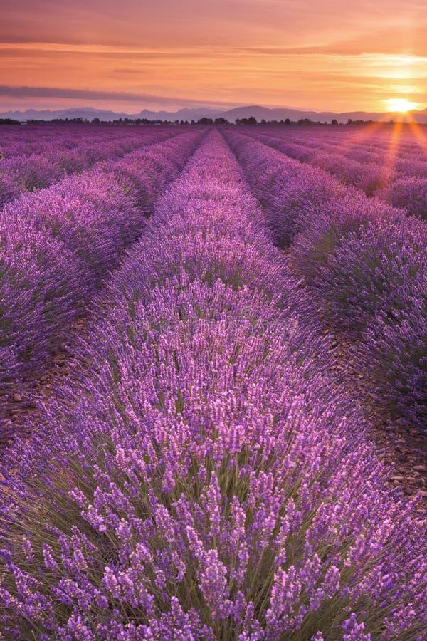 Soluppgång över fält av lavendel i Provence, Frankrike royaltyfri fotografi