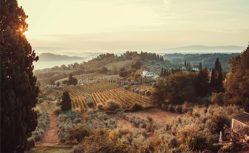 Soluppgång över fält av Tuscany Wineyards arbeta i trädgården träd, villor av bygd på ottatid, Italien royaltyfria bilder