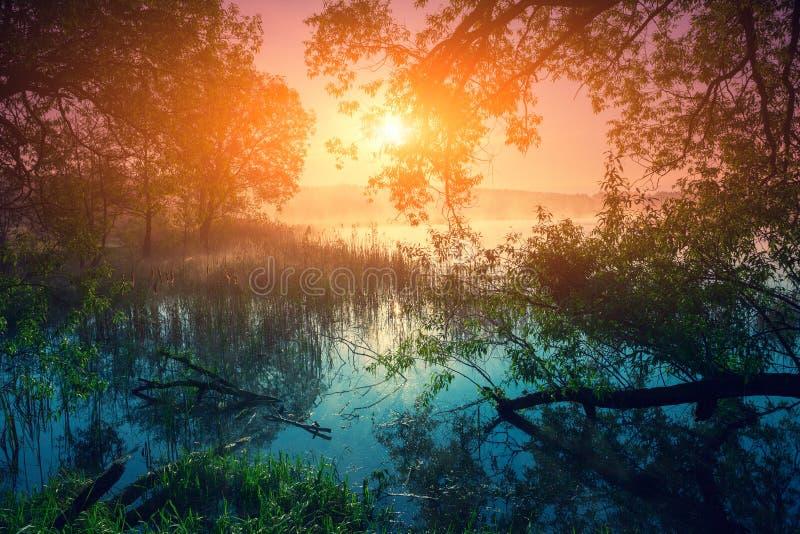 Soluppgång över laken royaltyfri bild