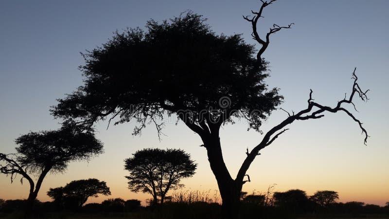 Soluppgång över Namibai arkivfoton