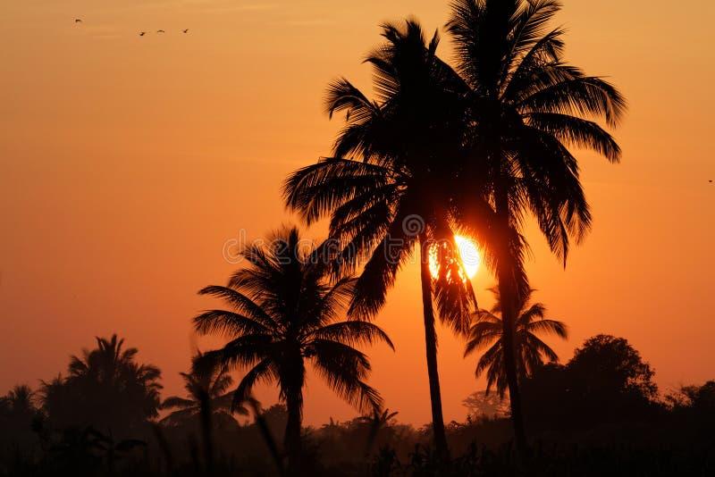 Soluppgång över palmträden royaltyfri fotografi