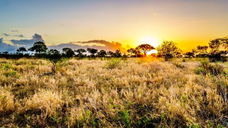Soluppgång över savann- och gräsfälten i den centrala Kruger nationalparken arkivfoton