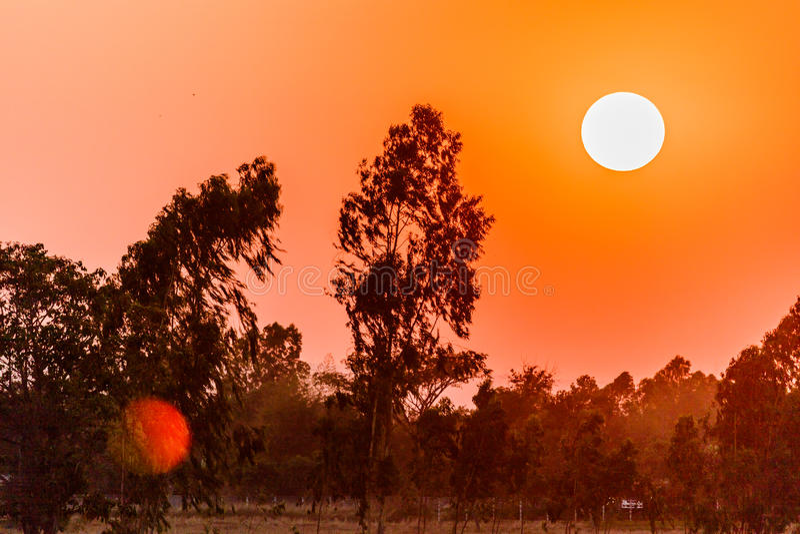 Soluppgång över träden och skogen fotografering för bildbyråer