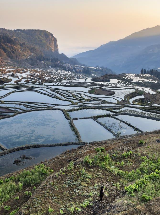 Soluppgång över YuanYang ris terrasserar i Yunnan, Kina, en av de senaste UNESCOvärldsarven royaltyfri foto