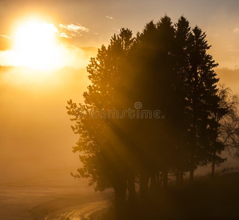 Soluppgång arkivfoton