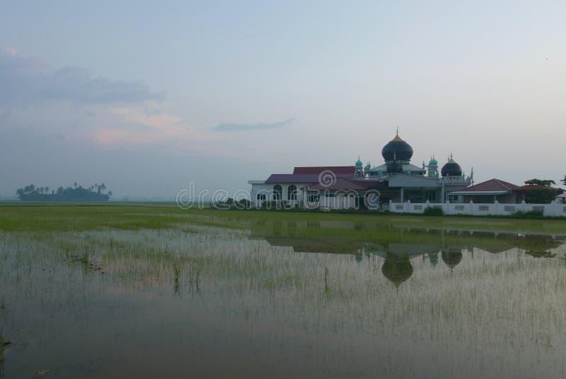 Soluppgång av en moské som omger vid risfältfältet i liten by på Kedah, Malaysia royaltyfria bilder