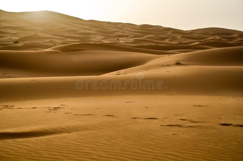 soluppgång för dynsahara sand arkivbilder